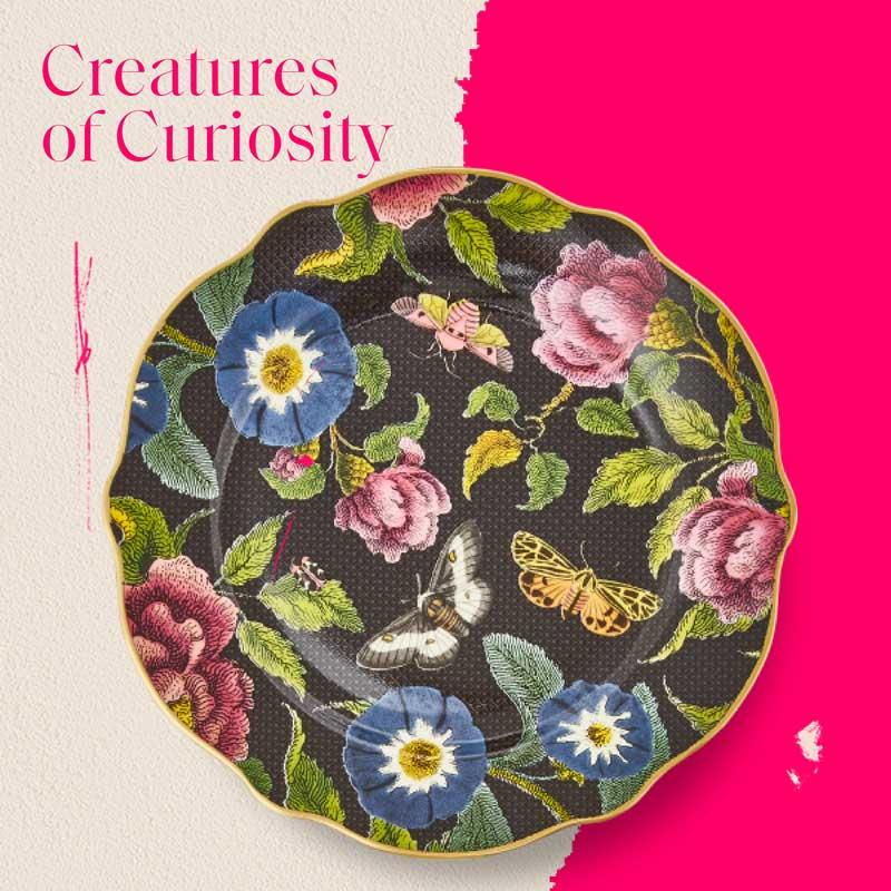 Creatures of Curiosity
